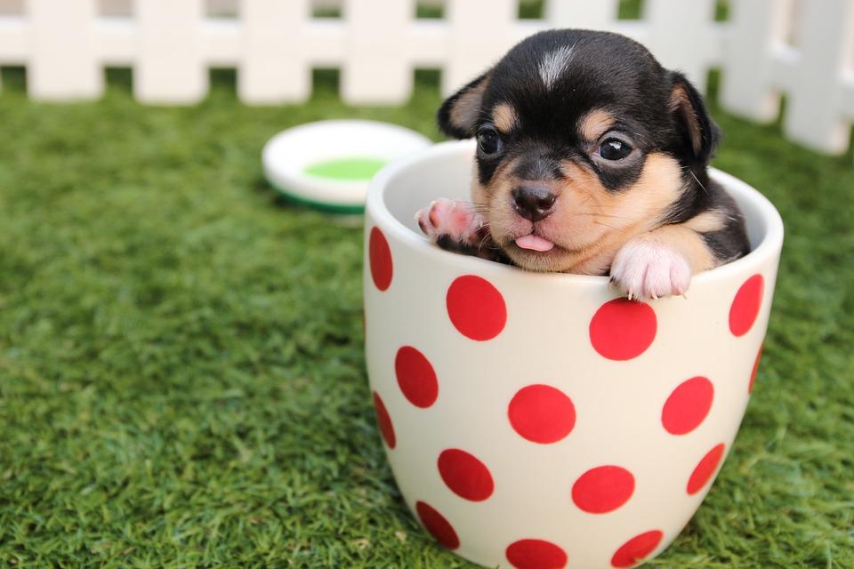 Какви зеленчуци може да яде Вашето куче?