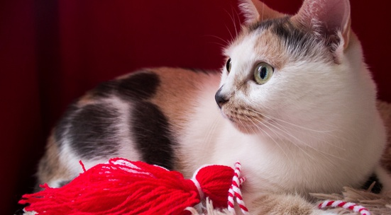 Изпрати мартенички за базар в полза на бездомни животни София