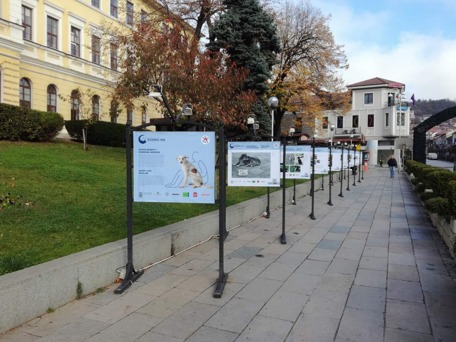 """Изложбата """"Осинови любовта"""" гостува във Велико Търново"""