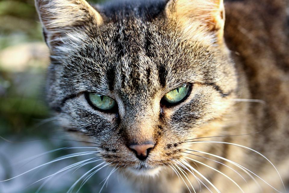 Котките лекуват депресия!