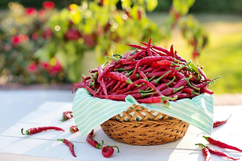 Лютивият червен пипер – ефективно лекарство против рак и редица други сериозни заболявания!