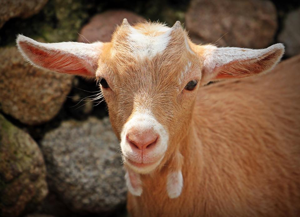 Д-р Петър Бодуров: Ваксинация, а не масово умъртвяване на здрави животни