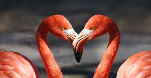 Как се влюбват различните зодии?